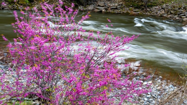 Wild Scenic Merced River photo