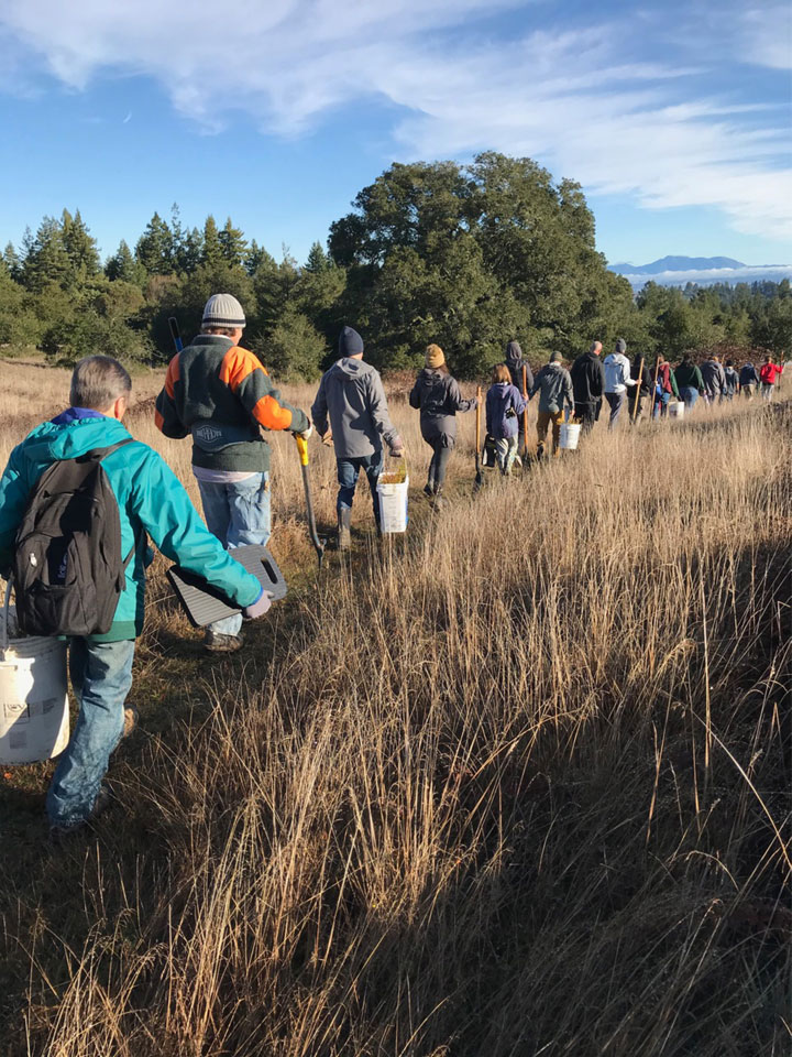 Forest Unlimited Redwood Tree Planting