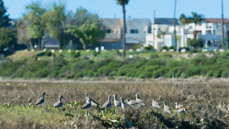 Mission Bay wetlands. Photo_by Greg Hoxsie